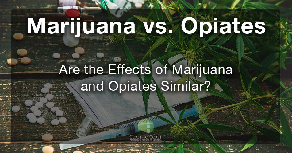 Is Marijuana an opiate? | Are the Effects of Marijuana and Opiates Similar?
